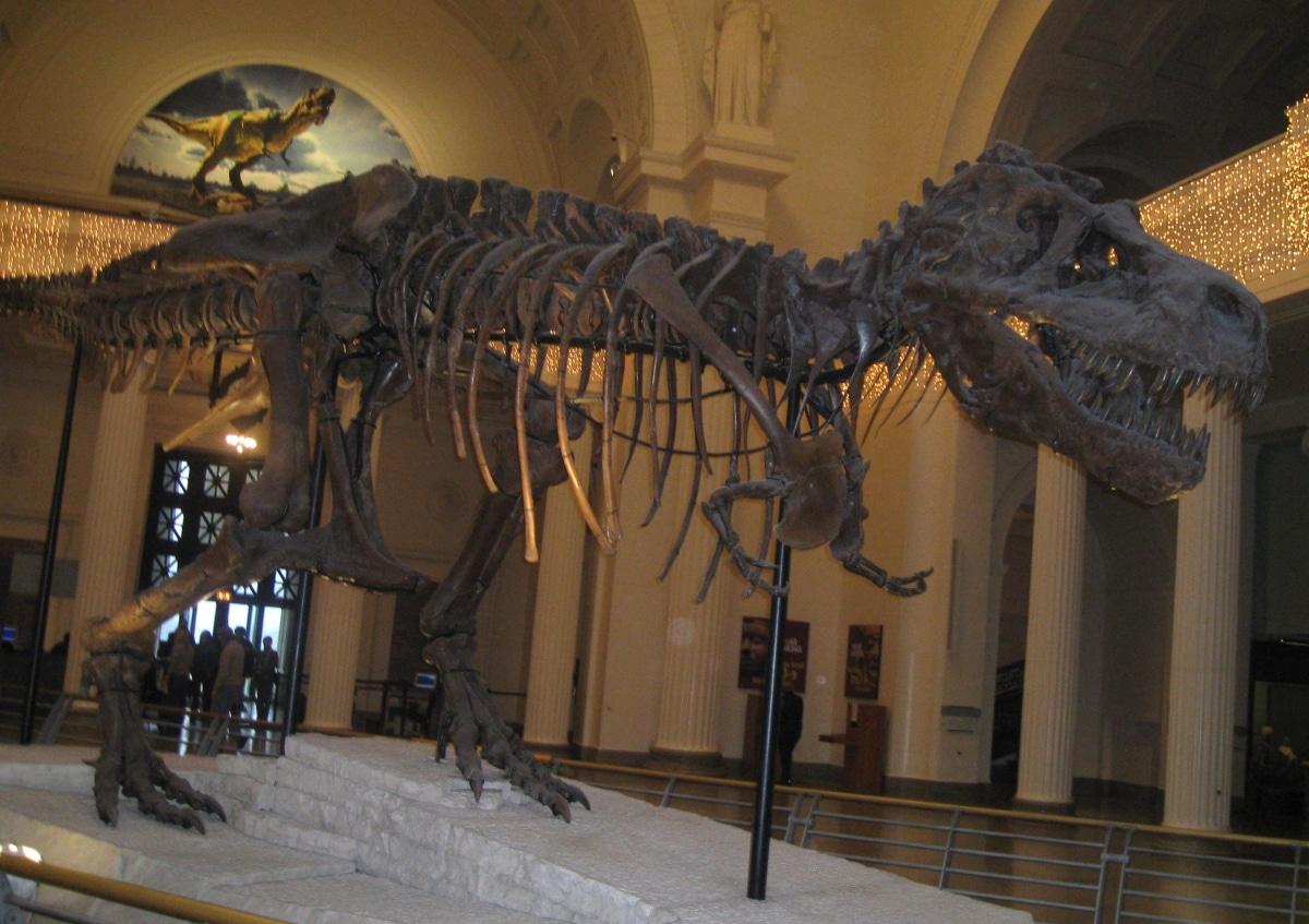 Qué tipo de morfología tenían los dinosaurios