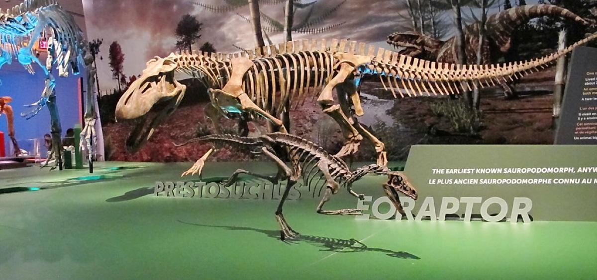 Eoraptor fue uno de los primeros dinosaurios en existir