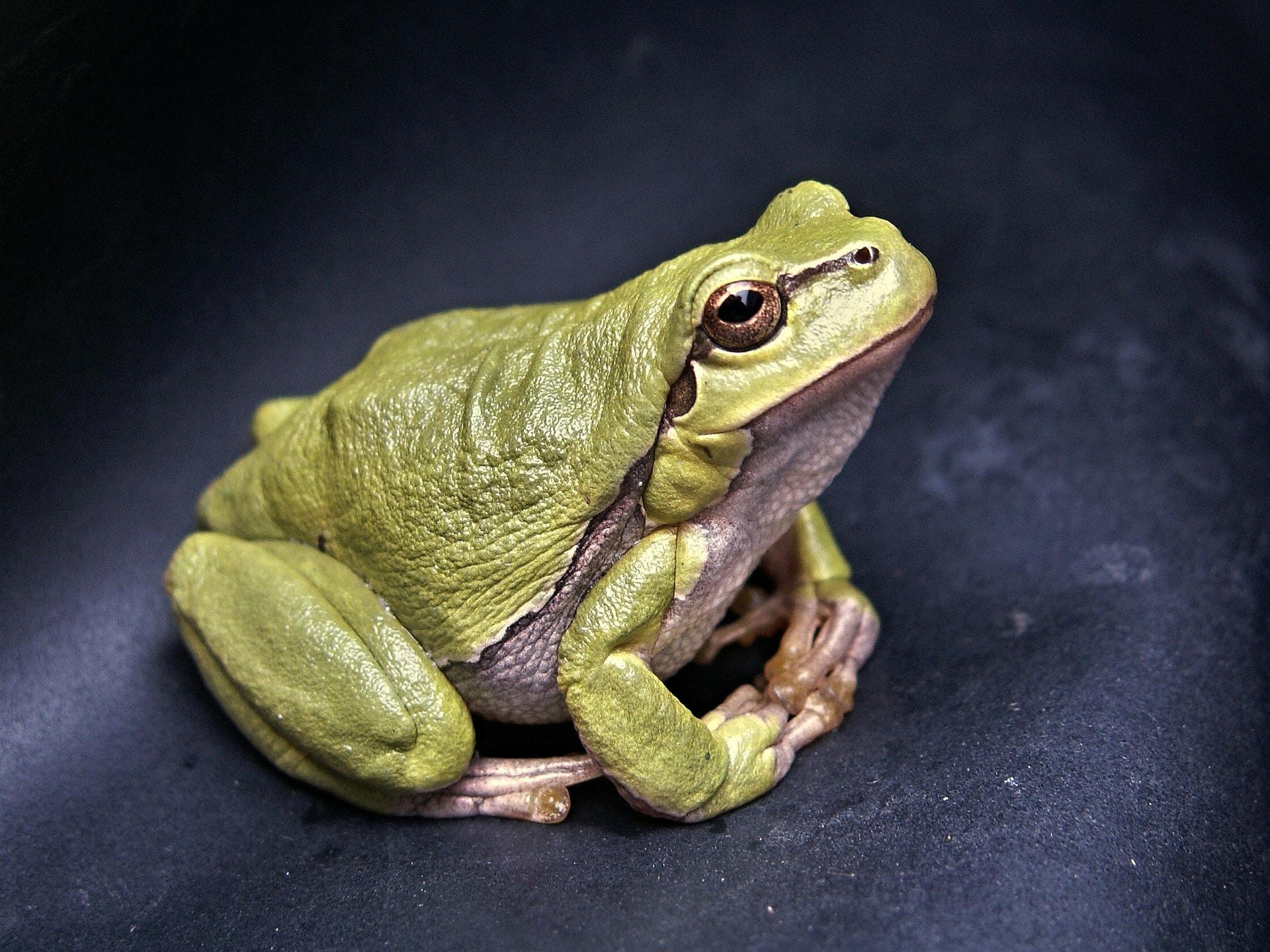 Los renacuajos pasan por una metamorfosis para convertirse en ranas