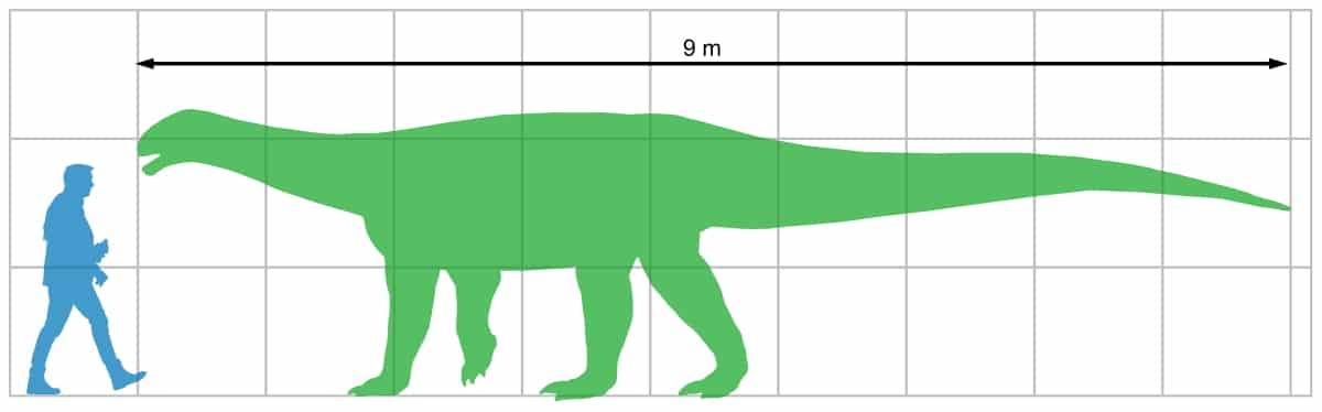 comparación de tamaño enter el ingentia prima y un ser humano