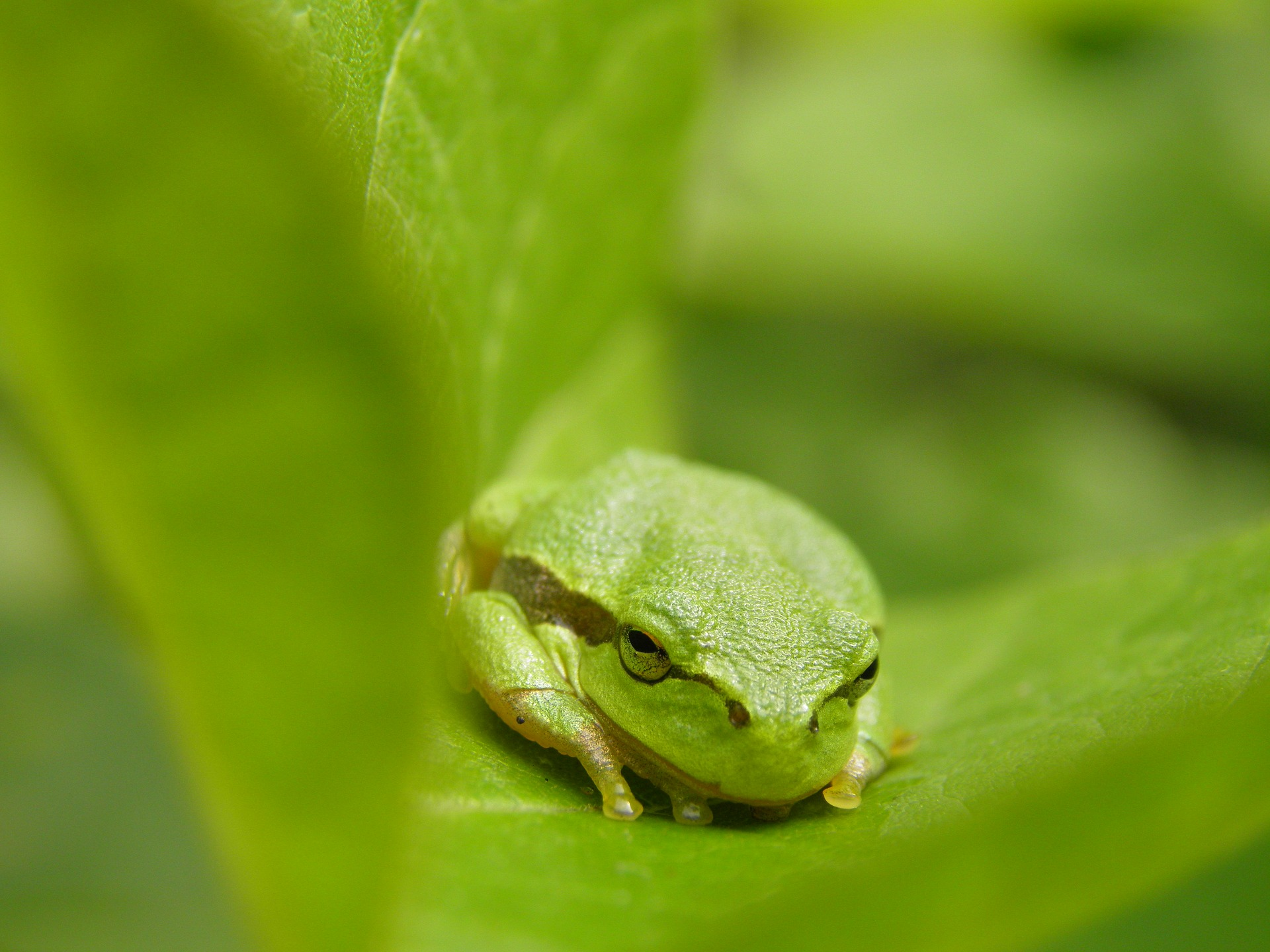 El hábitat de la rana meridional