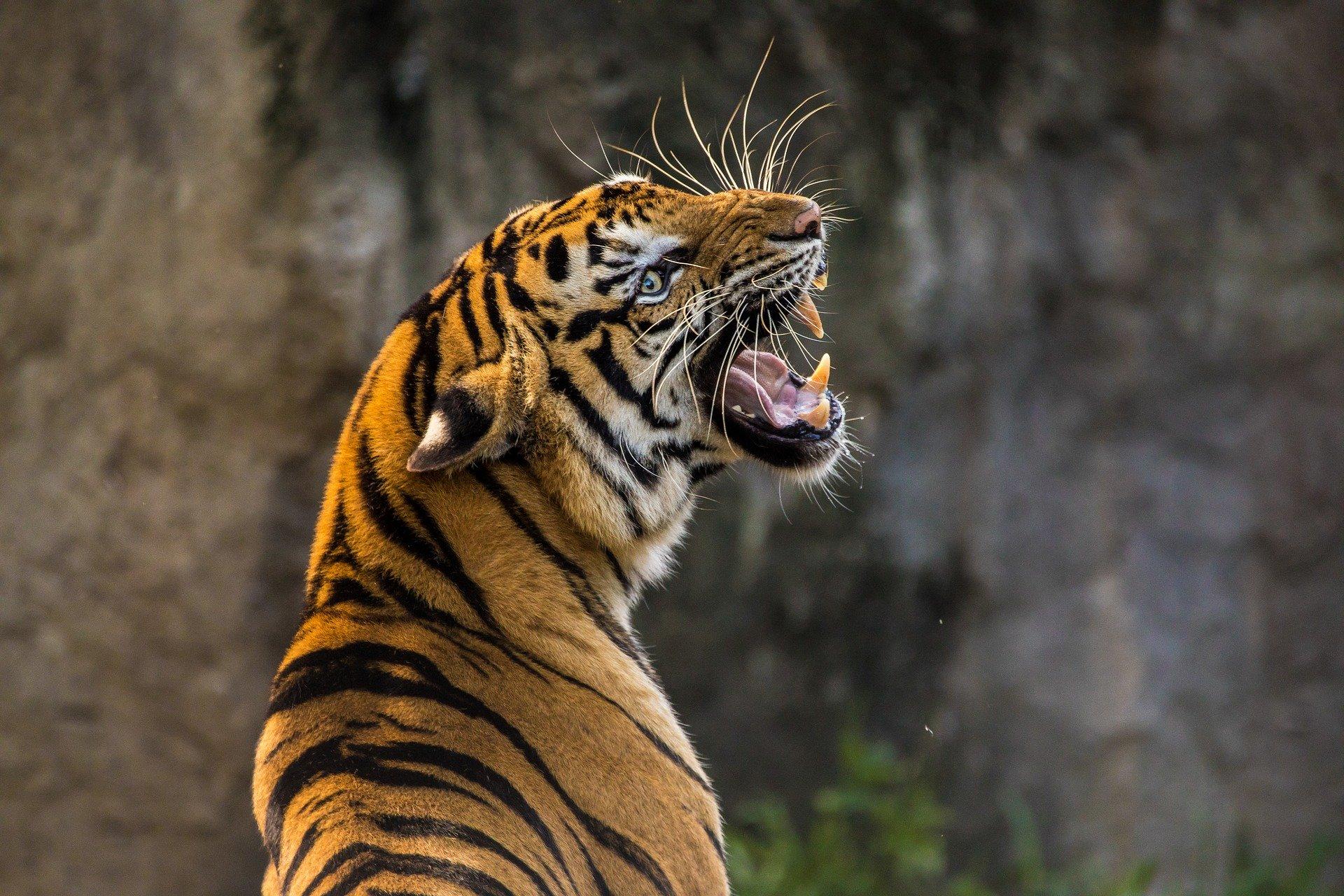 Hábitat del tigre