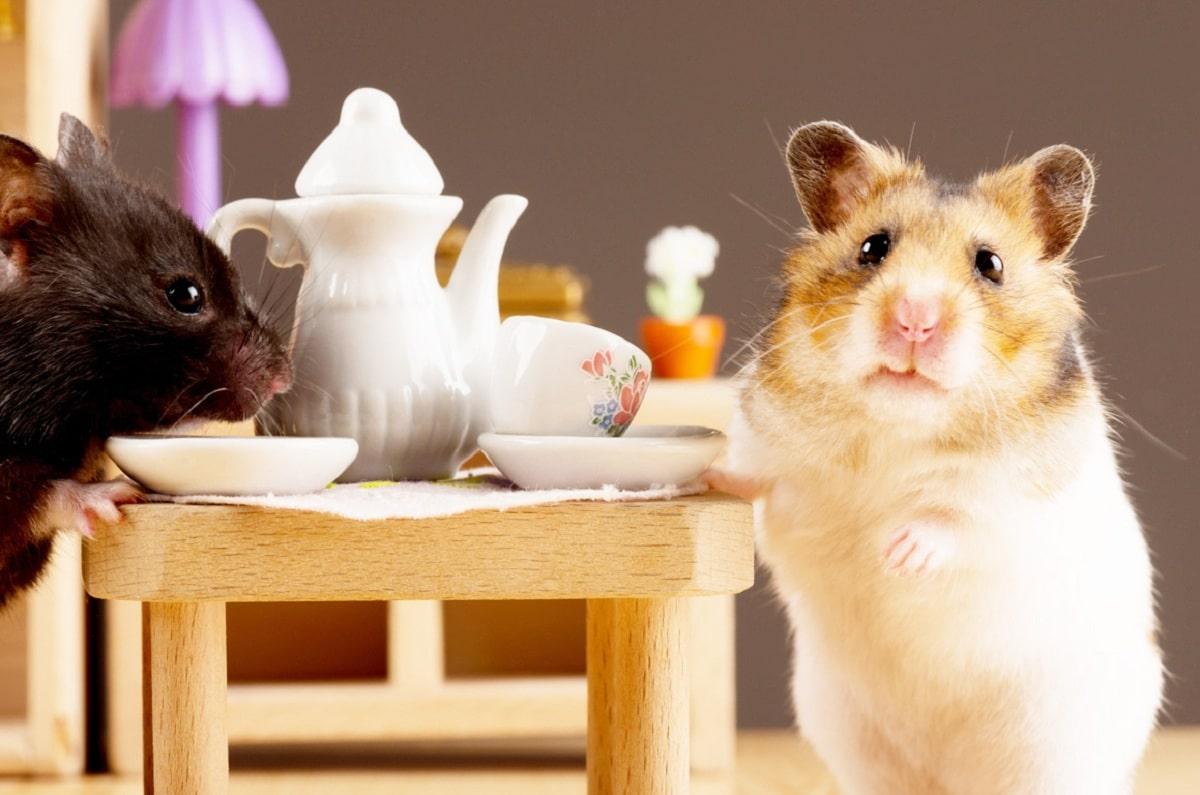 consejos de como cuidar a un hamster
