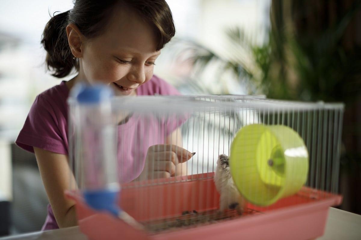 crios con su hamster