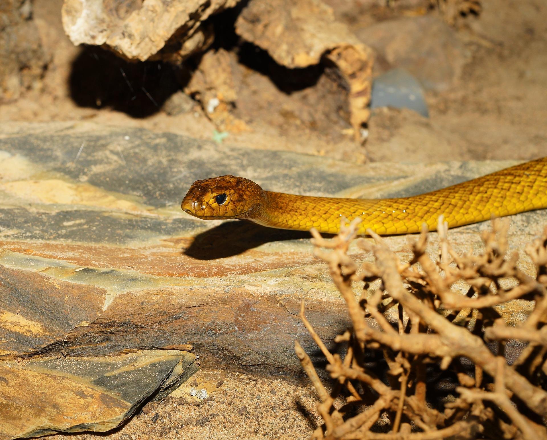 Hábitat de la serpiente taipan