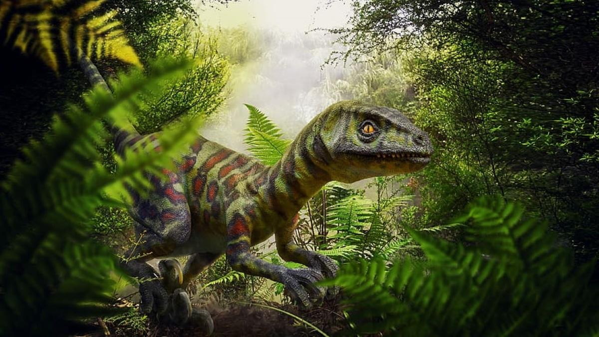 El velociraptor usaba su gran garrar para desgarrar a sus presas