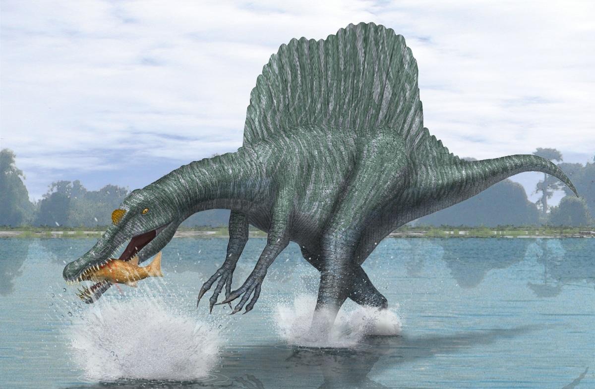 La alimentación del spinosaurus se debió en gran parte a presas marinas del norte de África