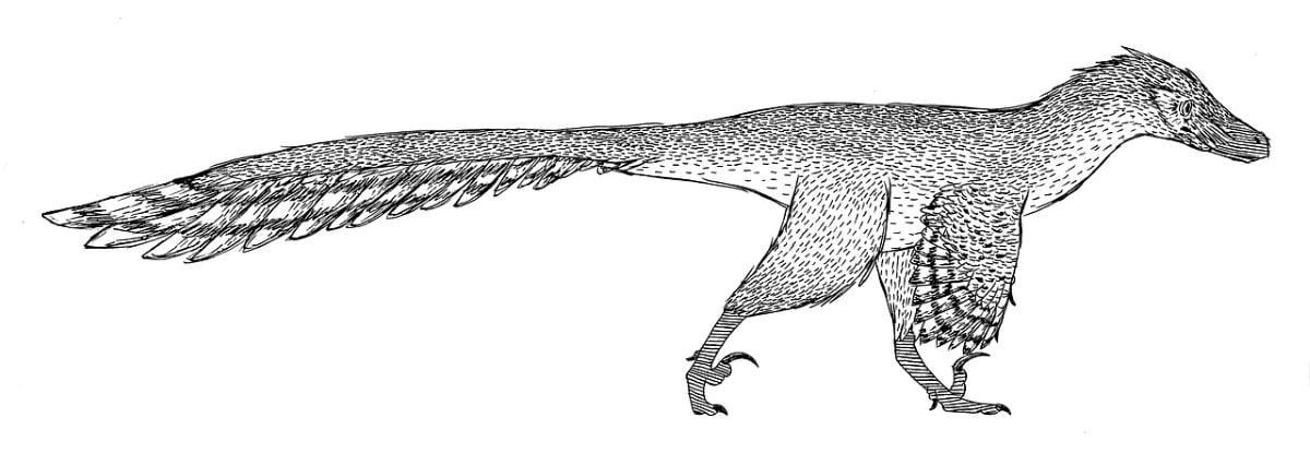 La morfología del Velociraptor era muy distinta a la de Jurassic Park