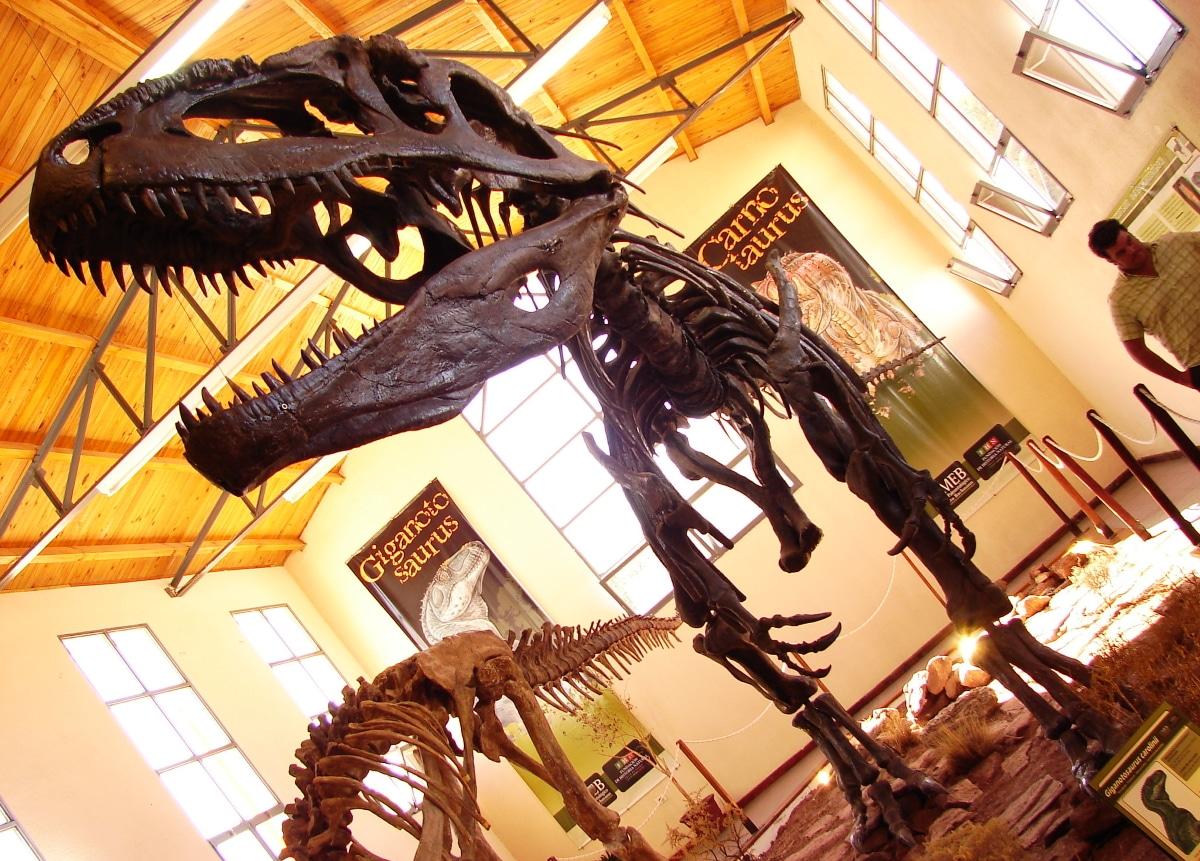El giganotosaurus fue el terópodo más grande que se conoce
