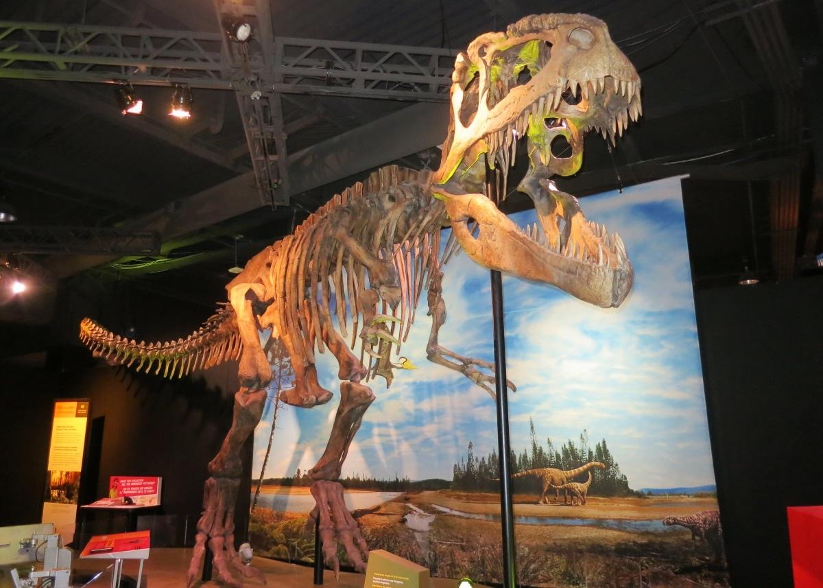 El giganotosaurio fue vivió hace entre 99'6 y 97 millones de años
