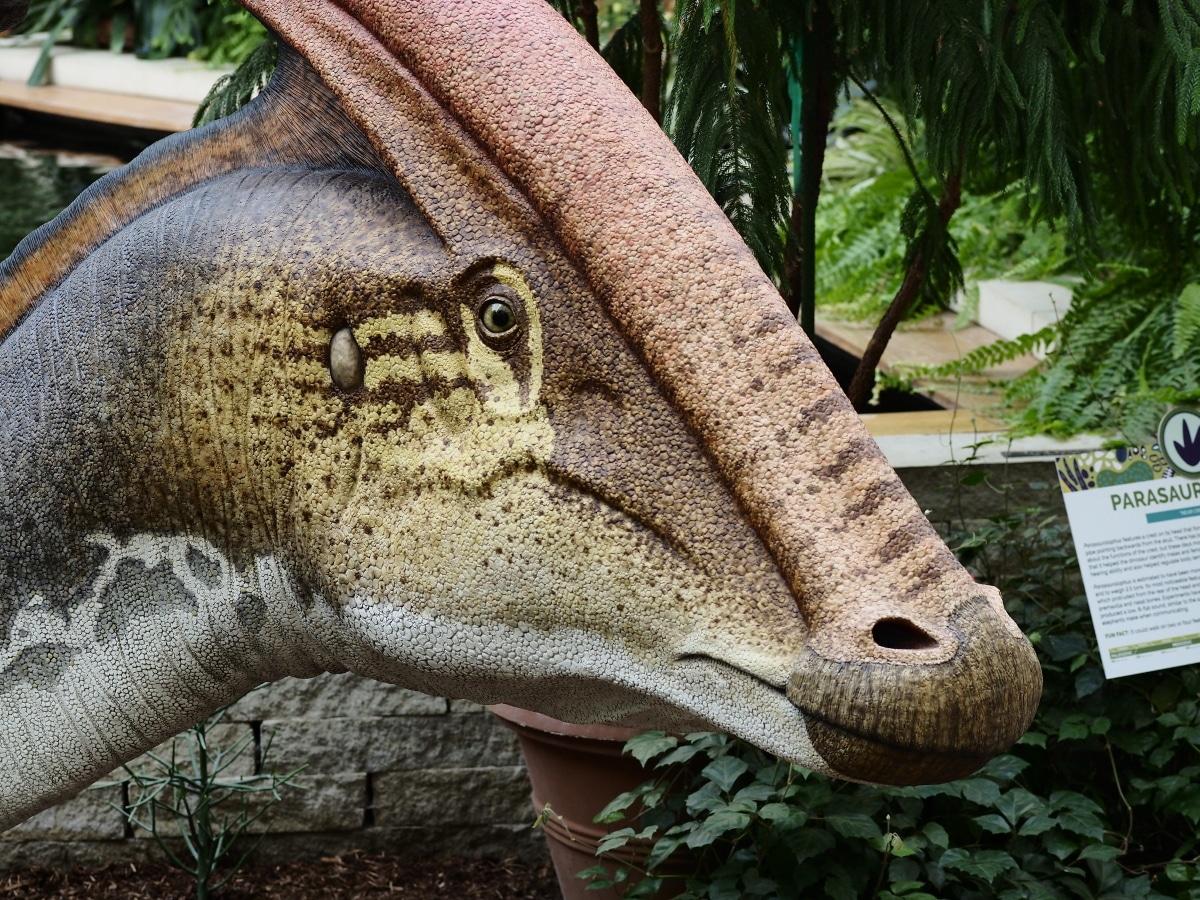 El Parasaurolophus disponía de una buena capacidad auditiva