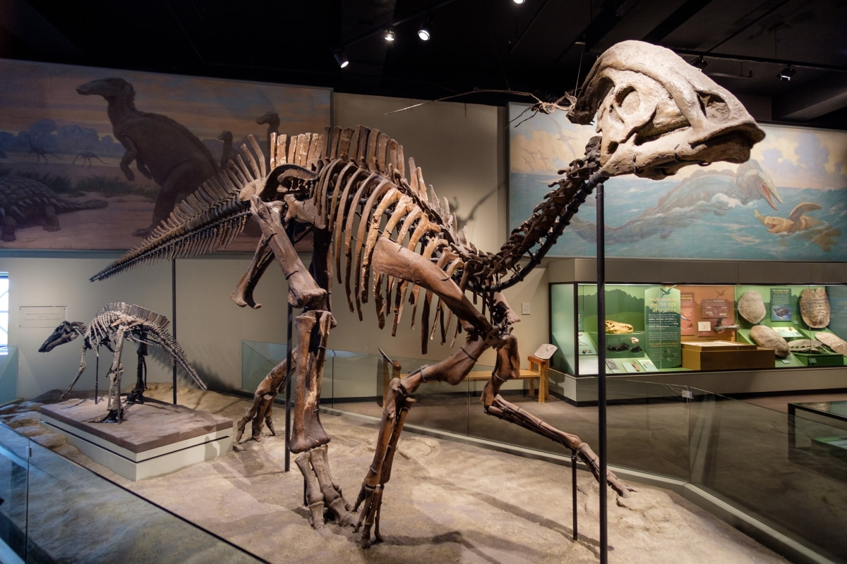 El Parasaurolophus es conocido por su cresta en la cabeza