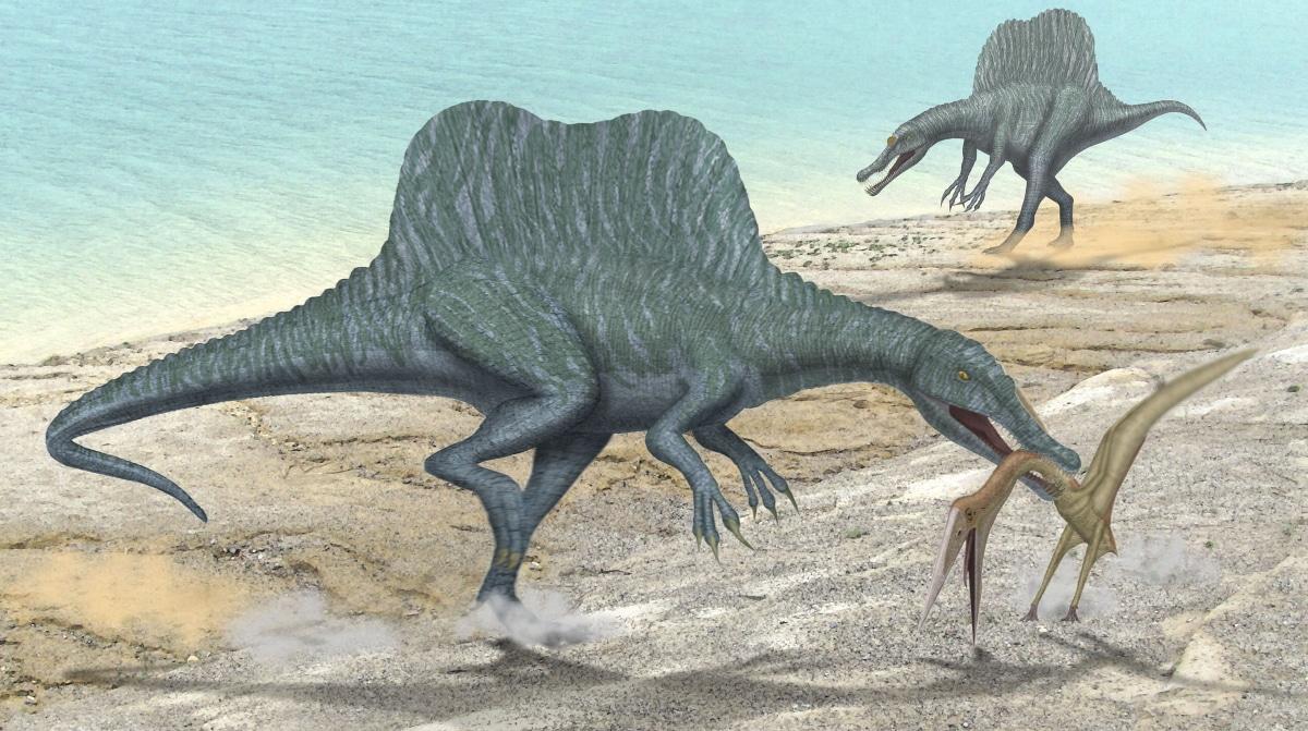 El spinosaurus sabía cazar tanto en medio terrestre como acuático