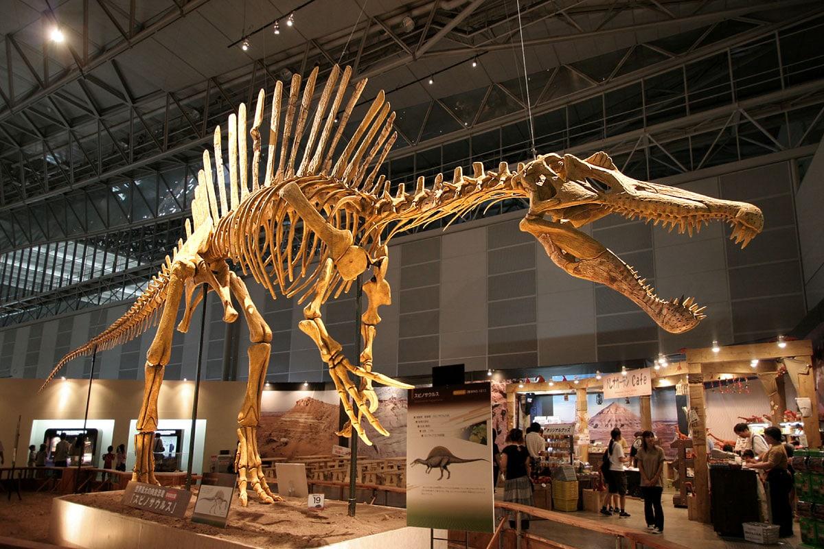 El Spinosaurus fue el dinosaurio carnívoro más grande que existió