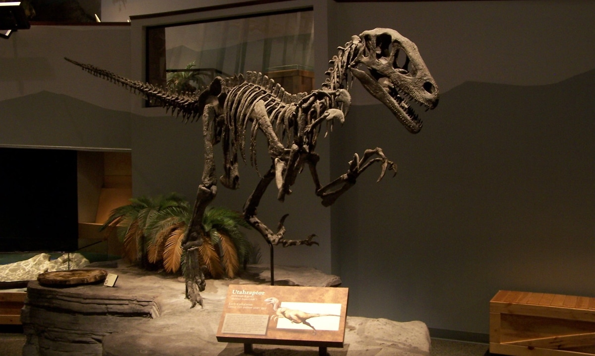 el Utahraptor fue un dinosaurio muy agrsivo ágil y rápido