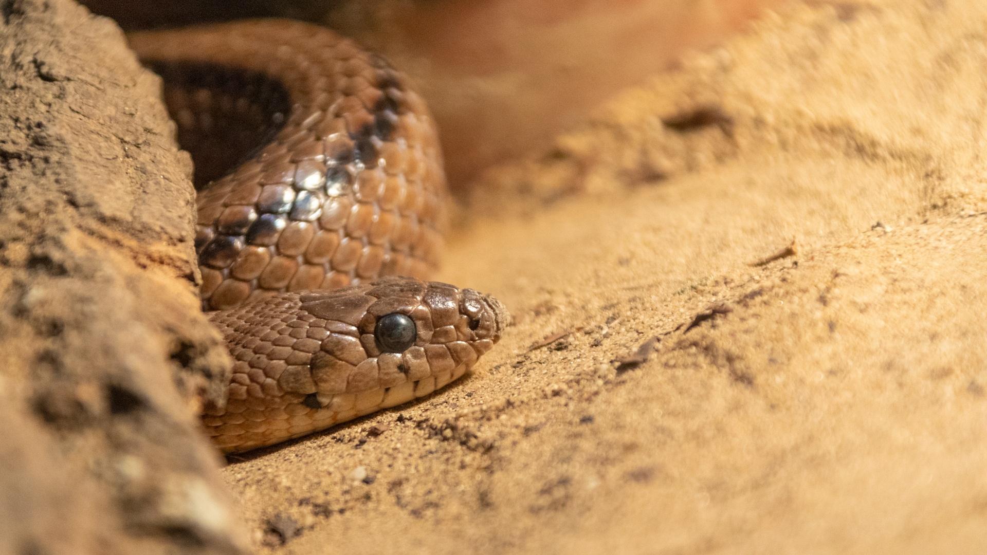 La alimentación de la serpiente de escalera
