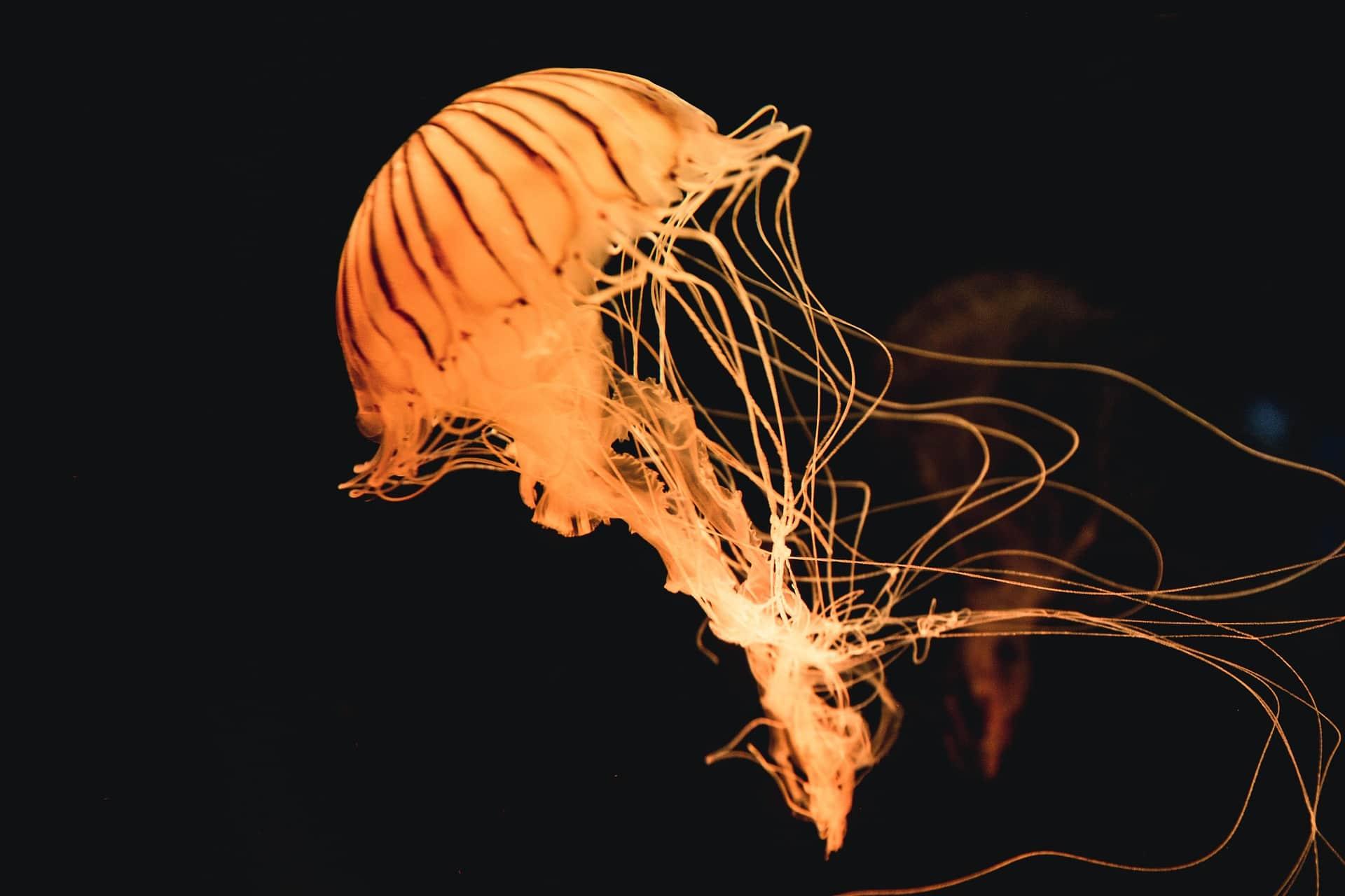 El tratamiento si te pica una medusa