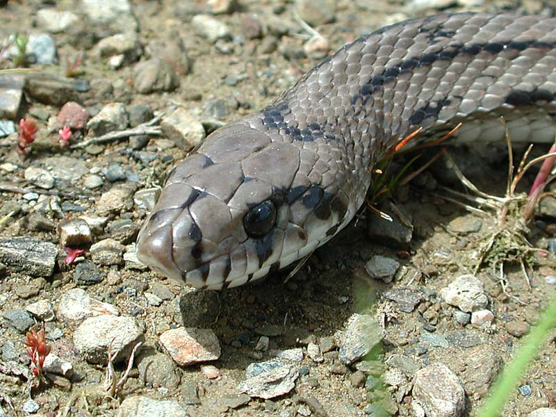 El comportamiento de la serpiente de escalera