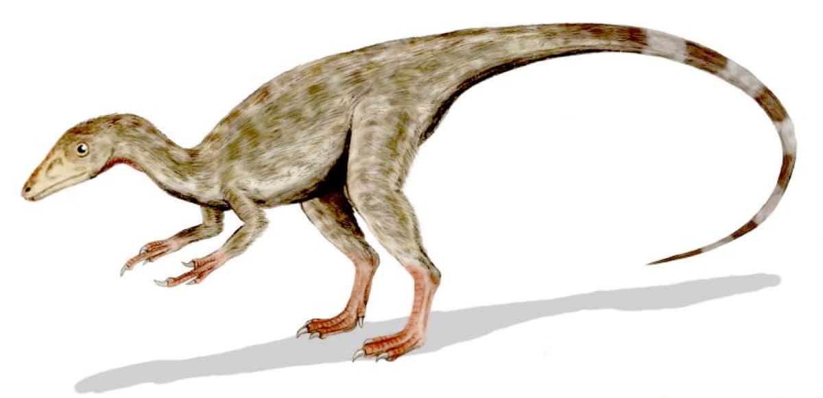 El compsognathus fue el dinosaurio más pequeño que existió