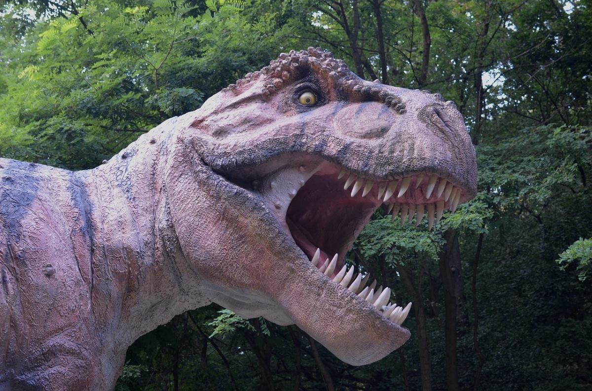 El cráneo del Tiranosaurio Rex llegaba a medir 1'50 metros de longitud