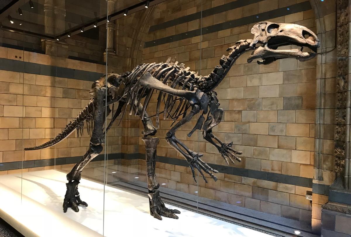 El Iguanodon fue descubierto en el 1822
