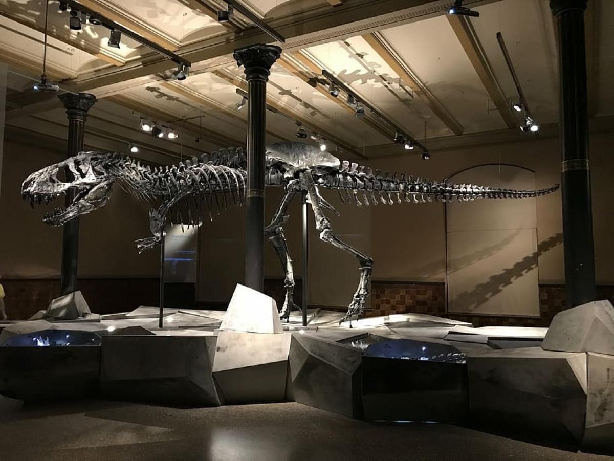 esqueleto de tiranosaurio rex en museo