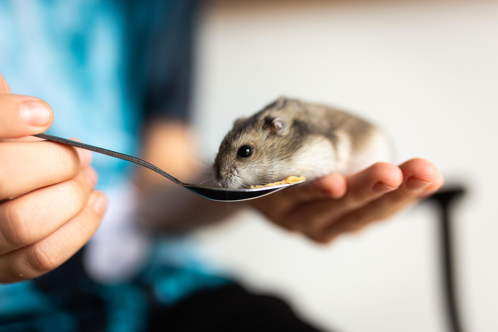 hamster especies
