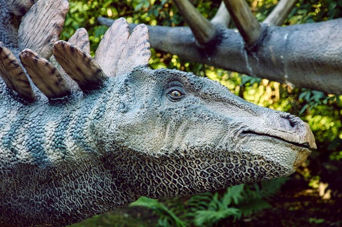 El cerebro del Stegosaurus era muy pequeño y pesaba sólo 80 gramos