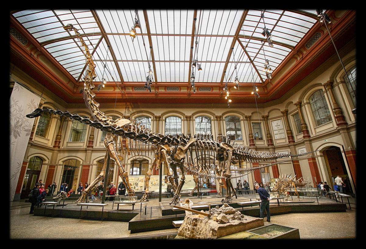 El braquiosaurio tenía las fosas nasales encima de la cabeza