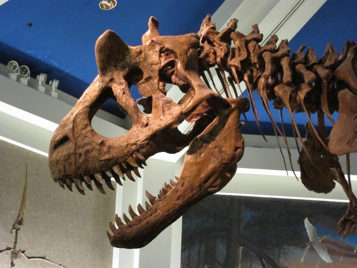 La cabeza del carnotaurus medía 60 centímetros de largo