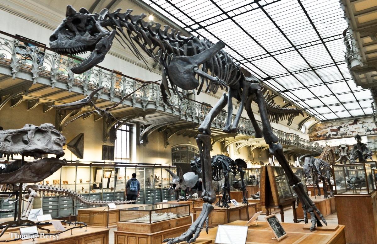 El carnotaurus medía entre 8 y 9 metros de longitud