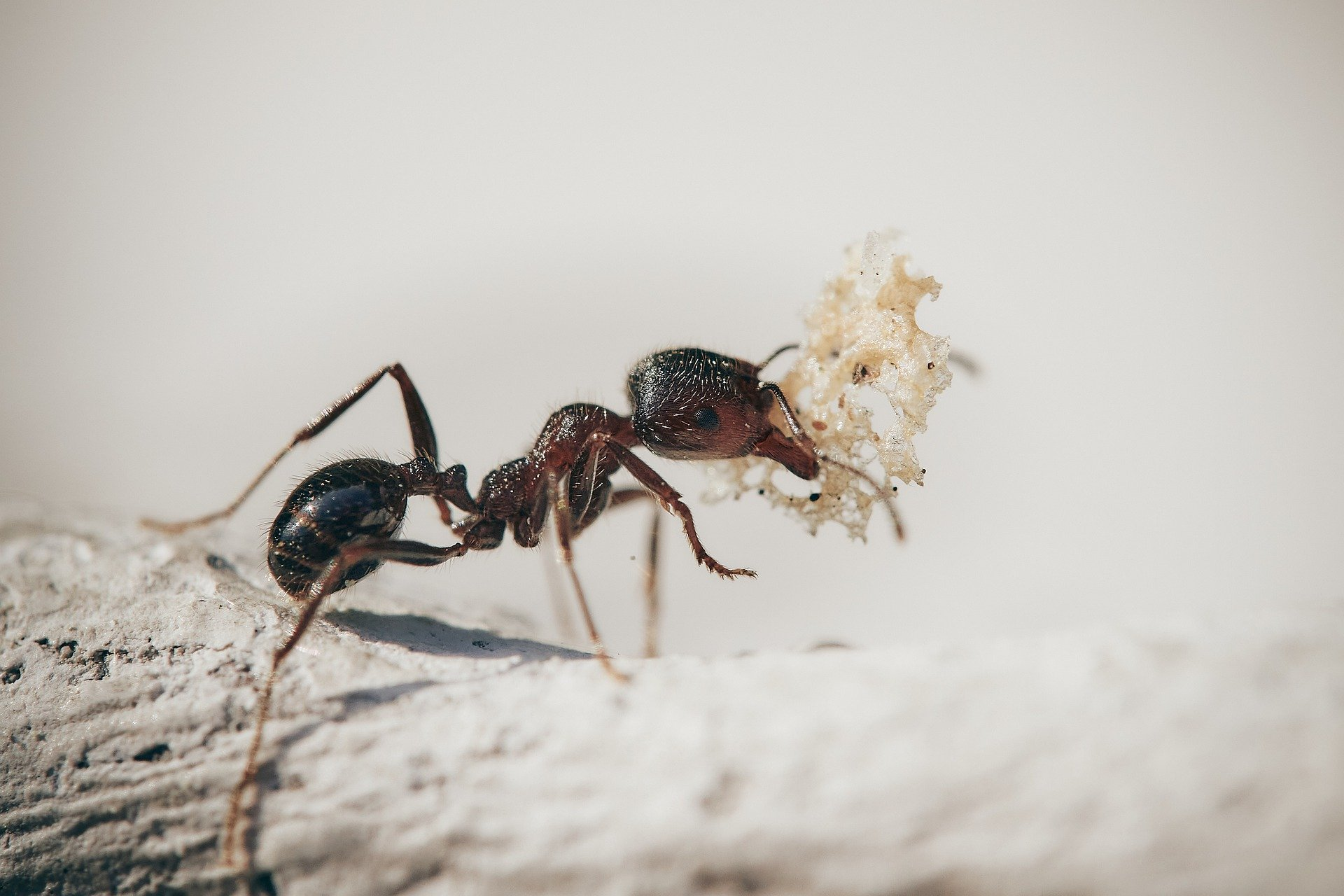 La reproducción de las hormigas