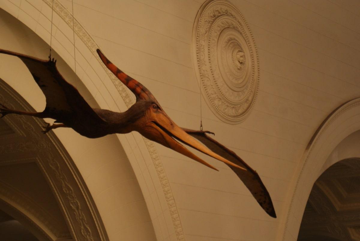 Los Pteranodons no eran dinosaurios