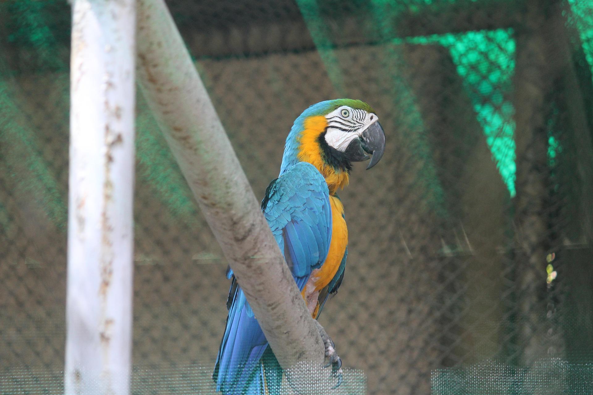 Los cuidados del guacamayo azul y amarillo