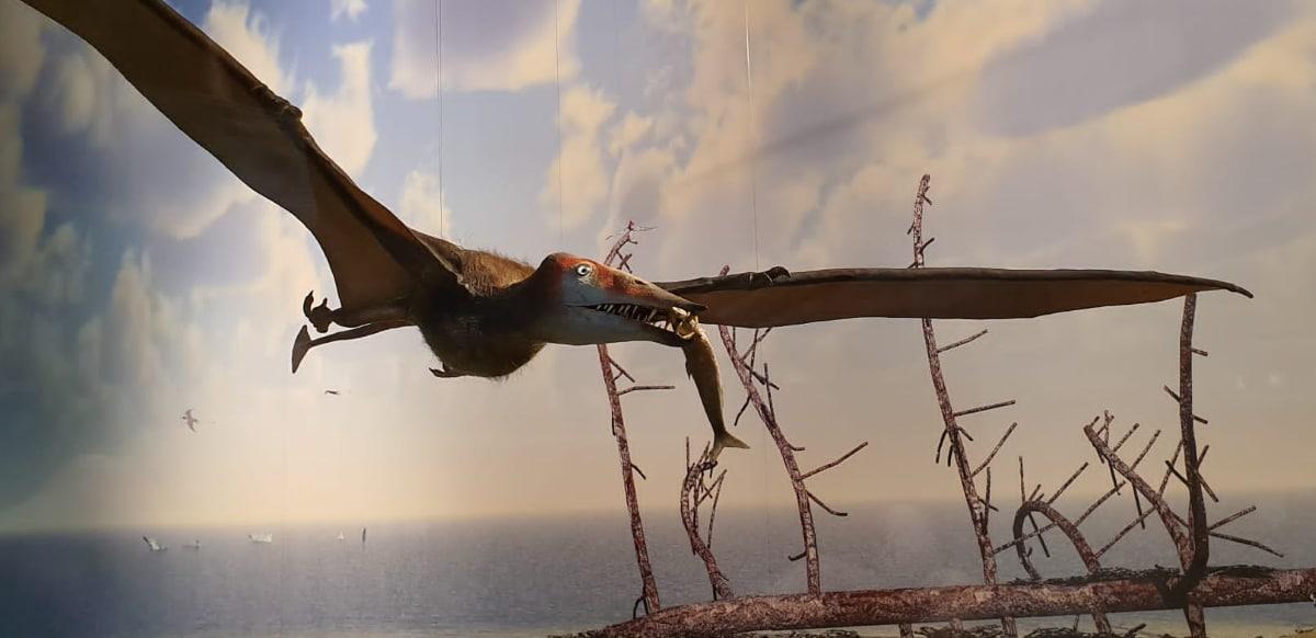 Los Pterosaurio tenían una membrana para volar llamada patagio