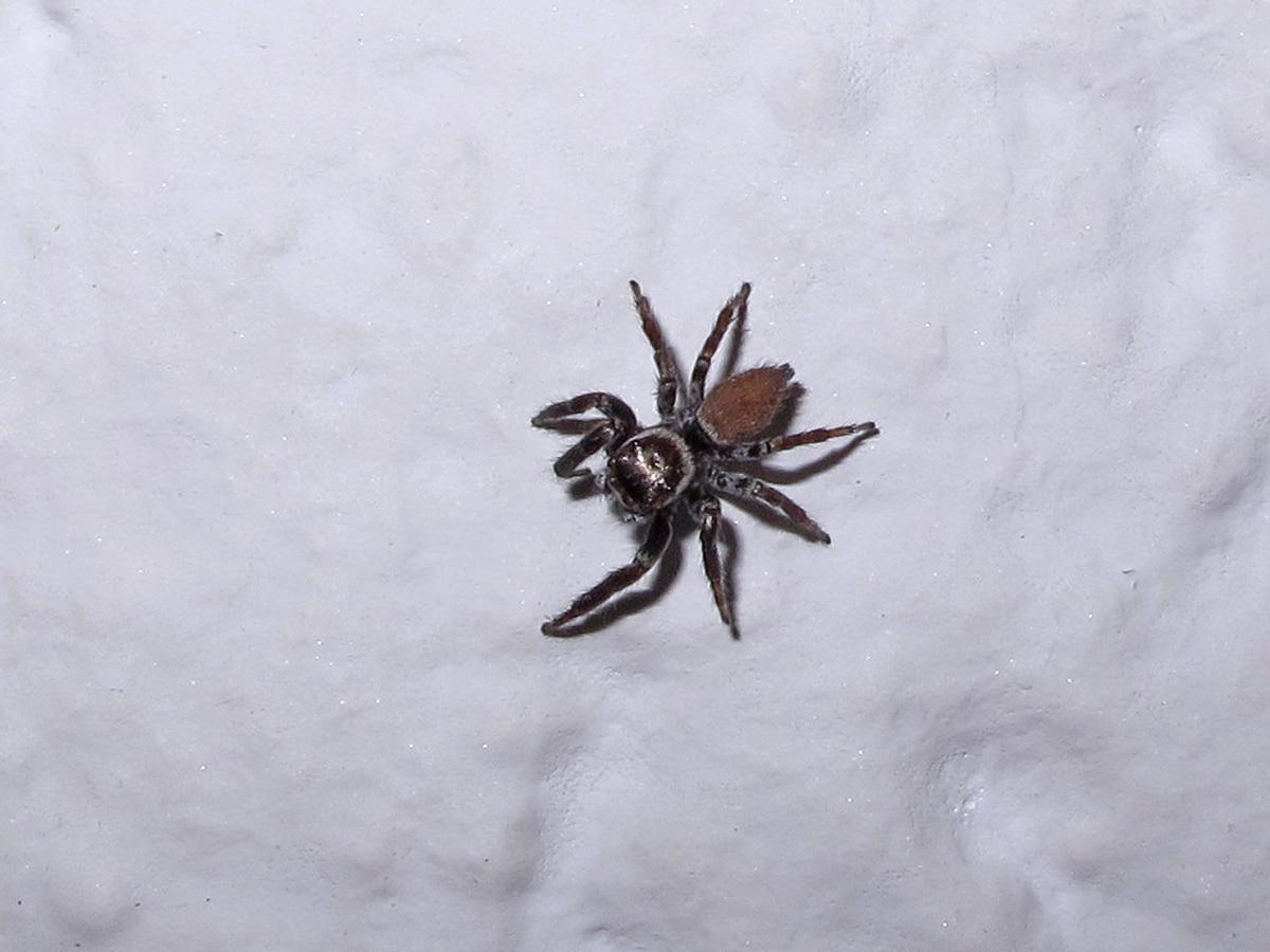 Lista de arañas en España