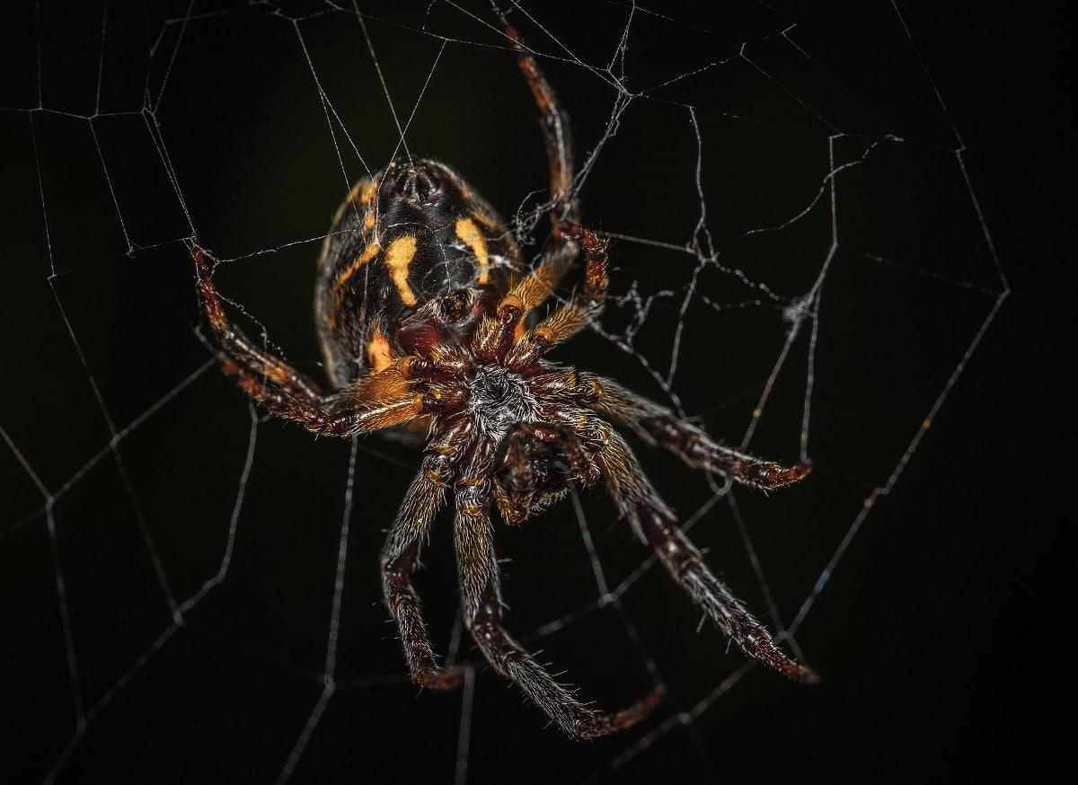 arañas españa