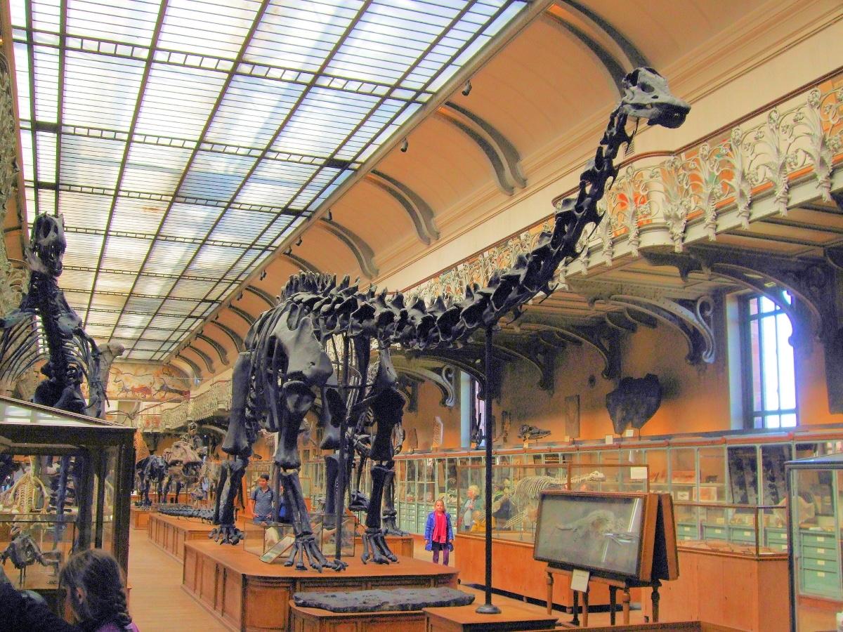 El Diplpdocus llegó a medir 32 metros de largada y tener un peso de hasta 30 toneladas