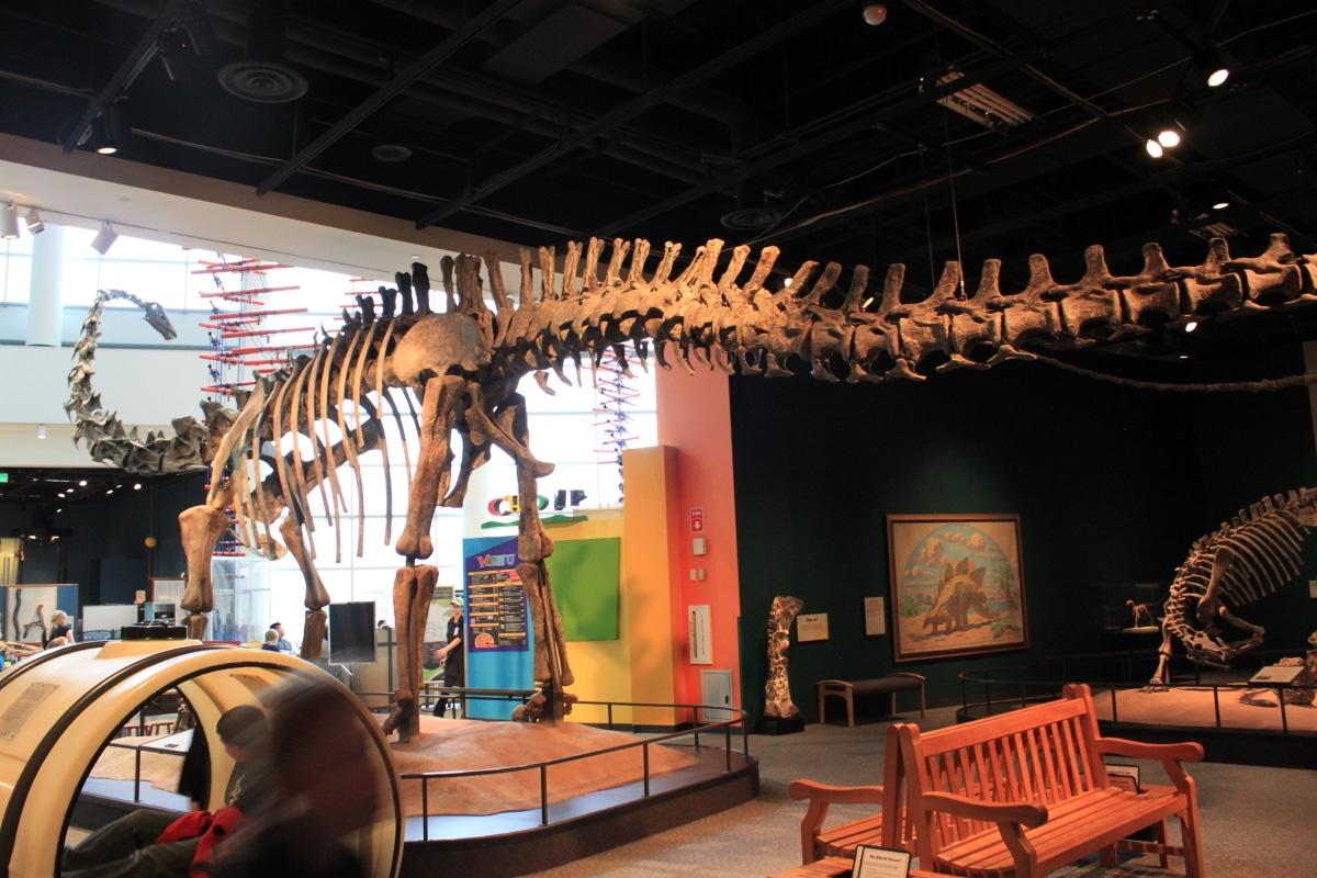 Existieron dos tipos de diplodocus, el Carnegii y el Hallorum