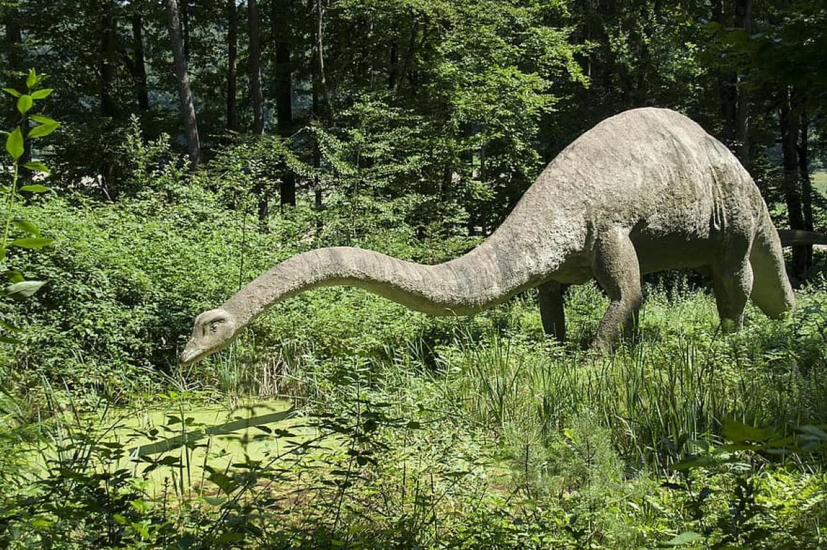 El Diplodocus fue descubierto en 1877 en la formación de Morrison, Colorado