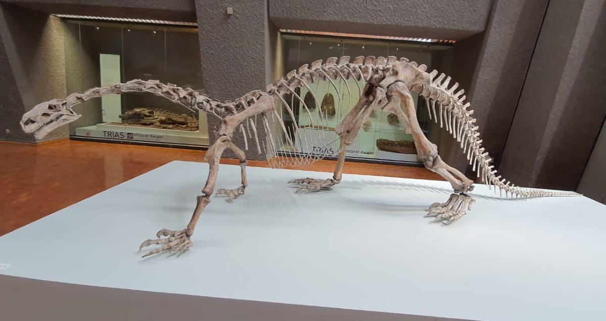 El tamaño máximo de un Plateosaurus podía llegar a los 10 metros