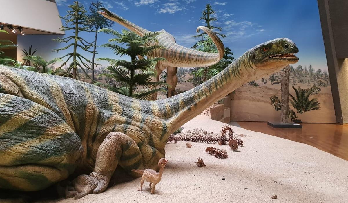 El Plateosaurus era herbívoro y bípedo, caminaba a dos patas