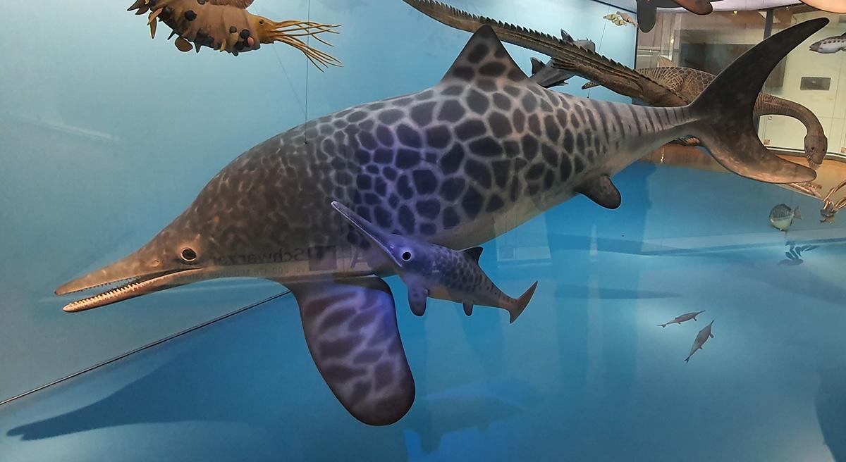 El ichthyosaurus podía dar a luz hasta once crías