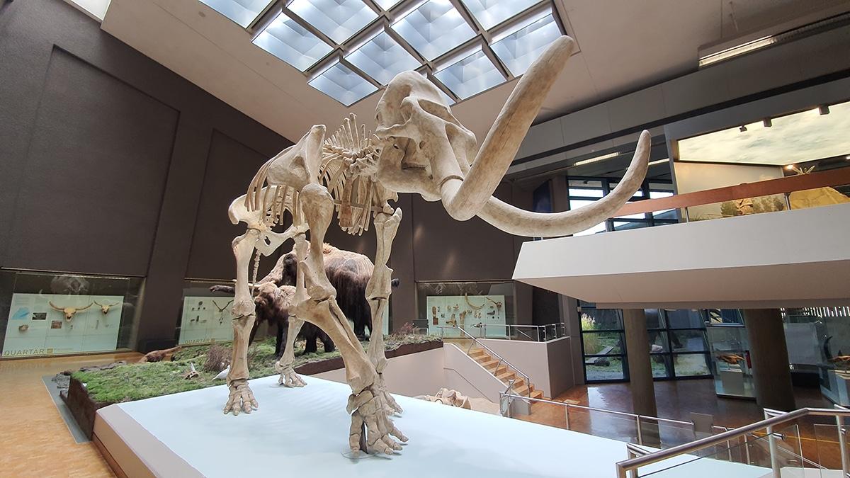 El mamut más conocido es el mamut lanudo