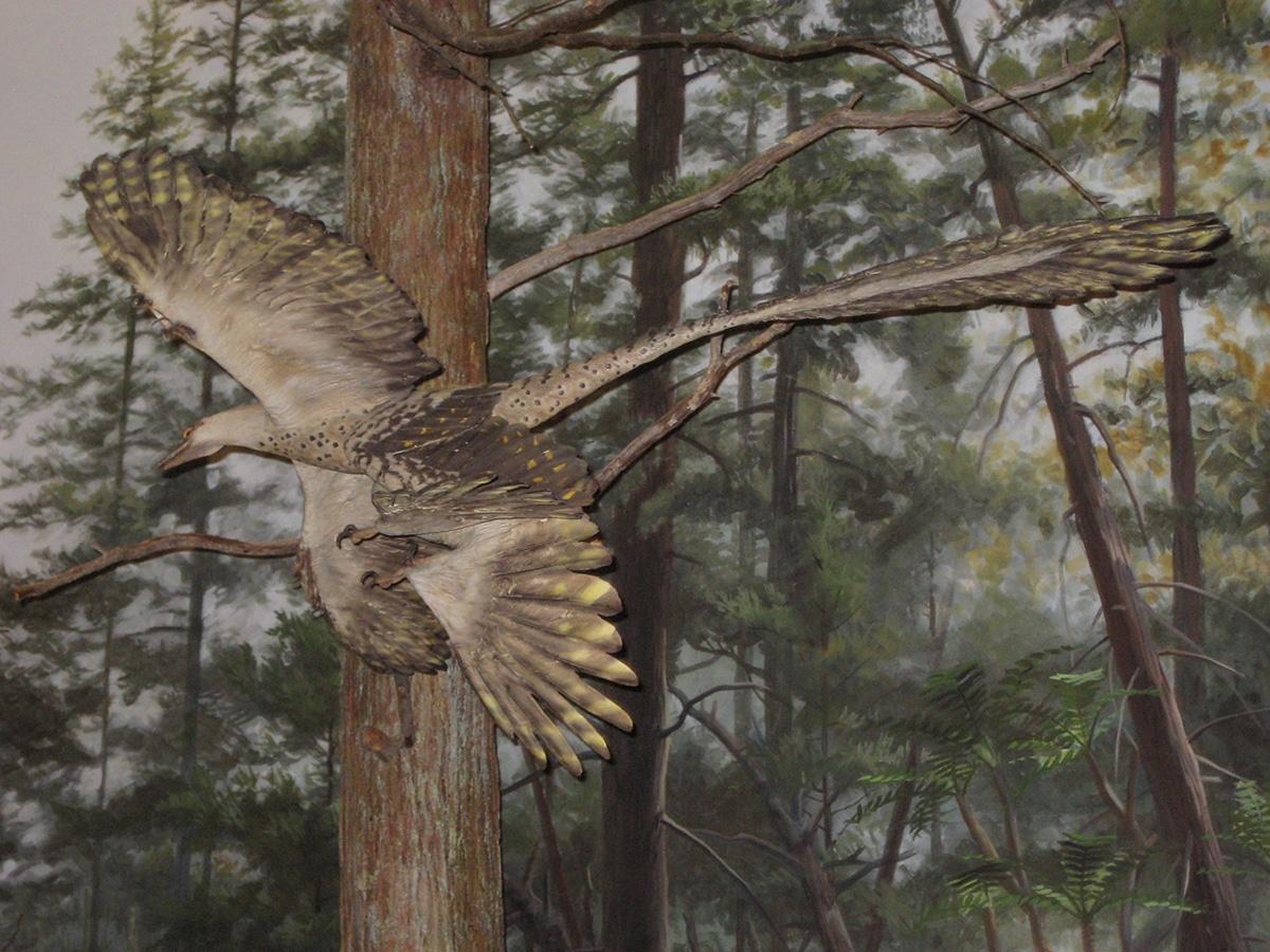 El Microraptor tenía cuatro alas