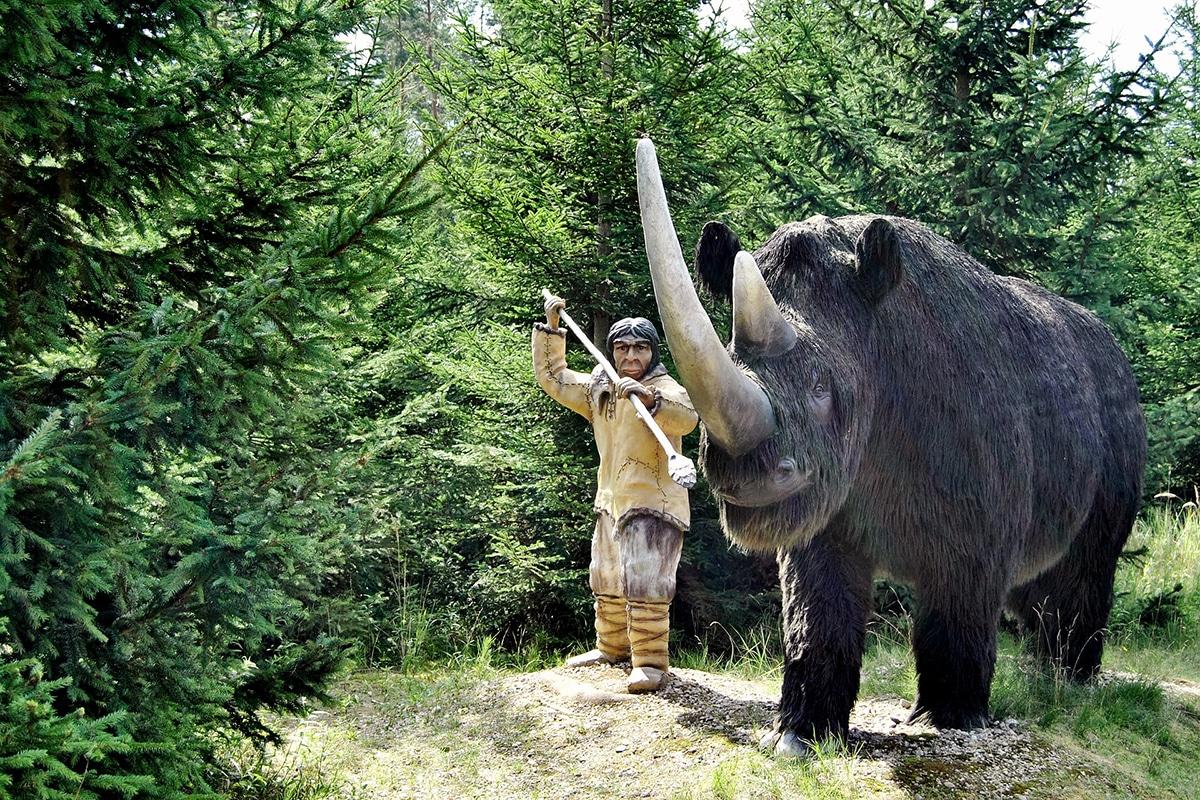 El rinoceronte lanudo fue cazado por el ser humano