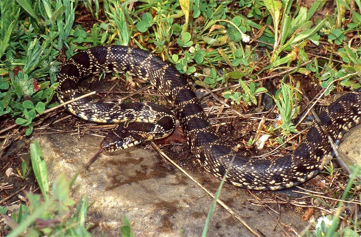 Hábitat serpiente de herradura