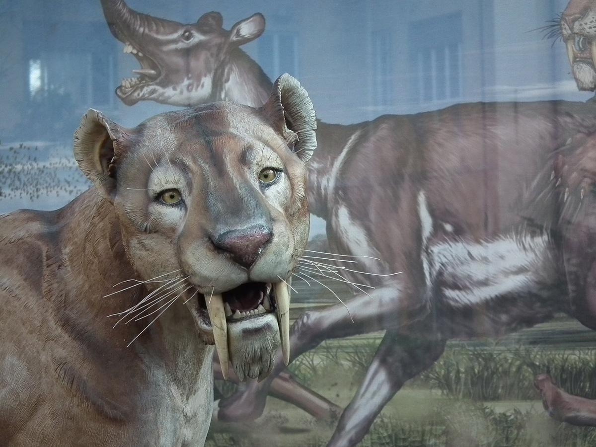 El smilodon también es conocido como diente de sable