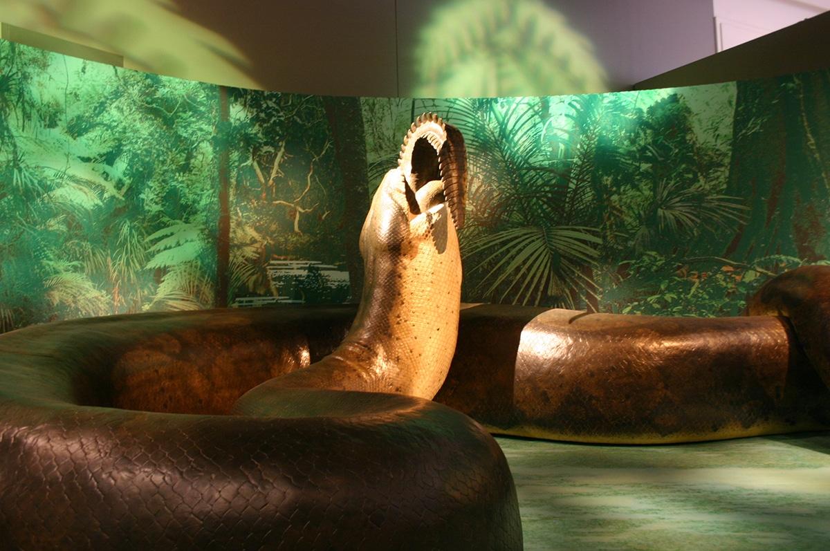 La titanoboa podía llegar a medir 14 metros de largo