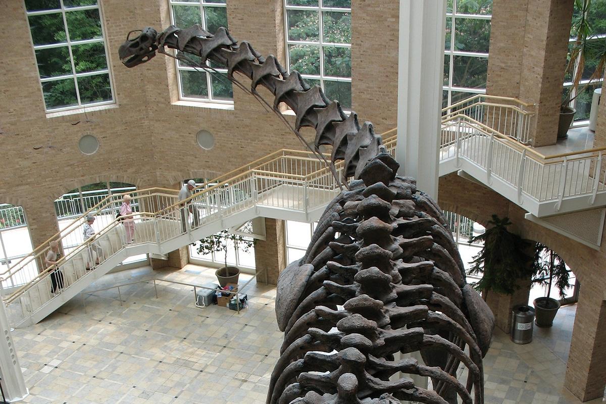 El Argentinosaurus usaba su cuello para llegar a la vegetación de los árboles